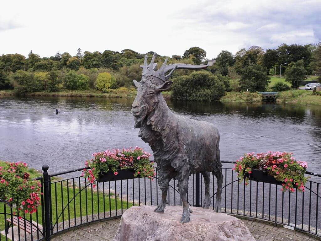 A picture of the puck or goat statue which is the centrepiece to the Killorglin Puck Fair in Ireland