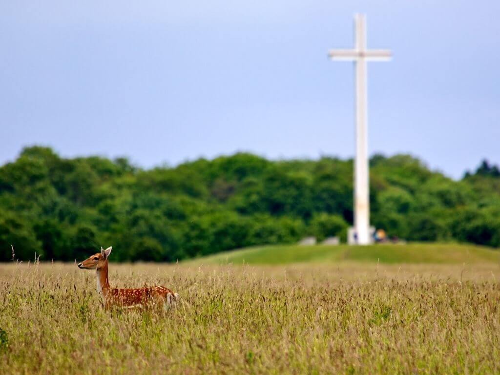 A picture of a red deer in a field in front of the Papal Cross in the Phoenix Park, Dublin, Ireland