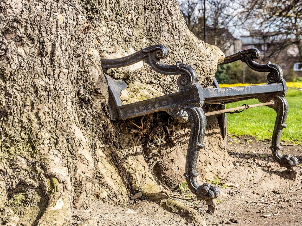 A picture of the Hungry Tree, a chair being swallowed by a tree, one of the unique and unusual things to do in Dublin