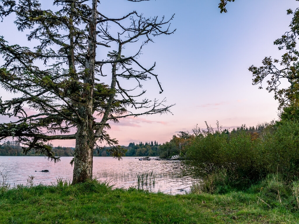 A picture of lough Eske with a tree in the foreground and the lough in the background surrounded by green trees and vegetation