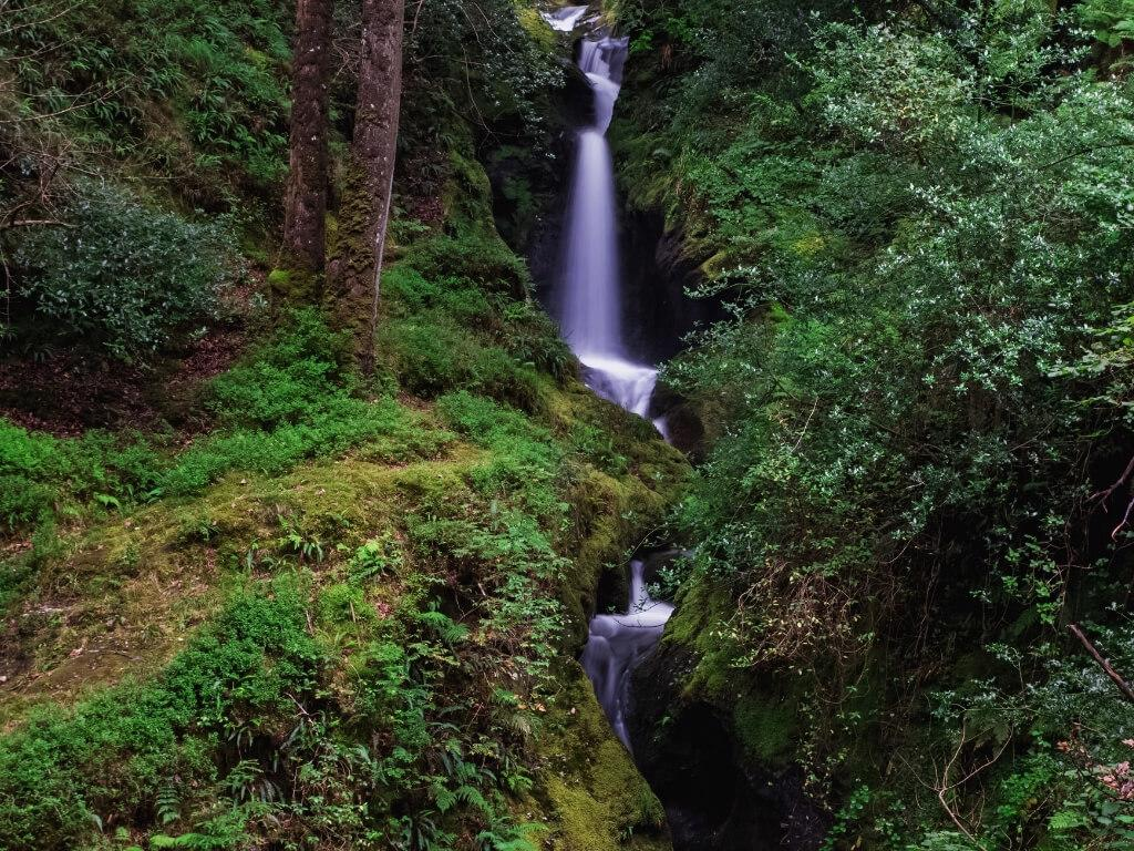 A picture of the Poulanass Waterfall in Ireland in a woodland setting