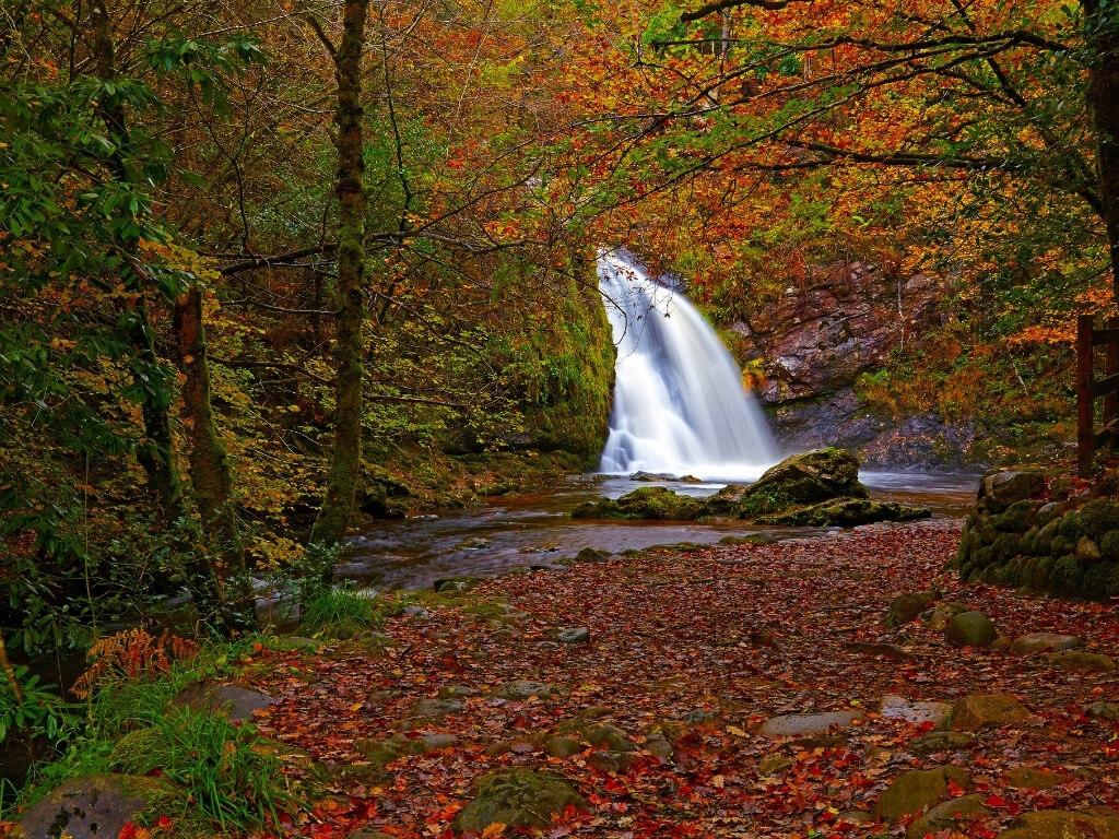 A picture of the Tourmakeady Waterfall during autumn with leaves on the ground