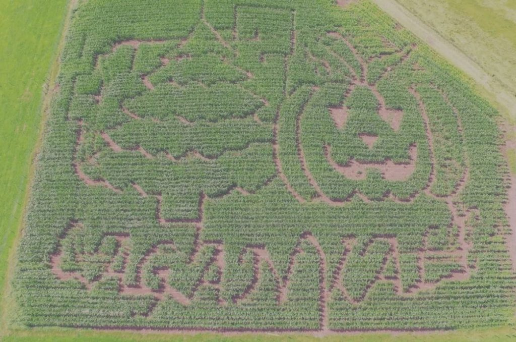 An aerial picture of the Laganvale maize maze in Northern Ireland