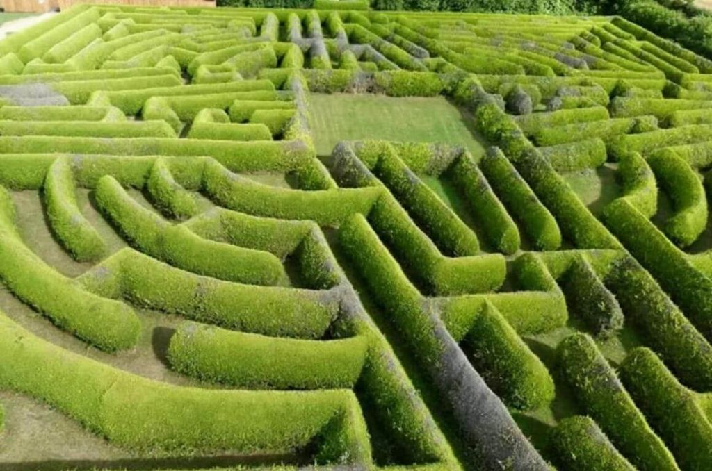 An aerial picture of the hedges at the Kildare Maze in Ireland
