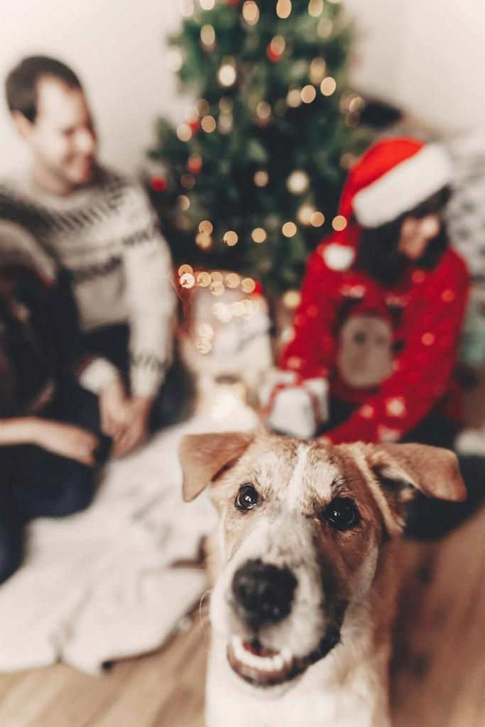 A picture of a dog in front of a couple sitting by a Christmas tree